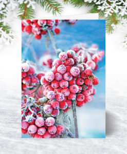 Frosty Berries Christmas Card