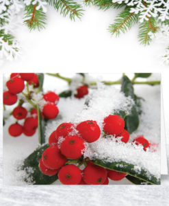 Holly Berries Christmas Card