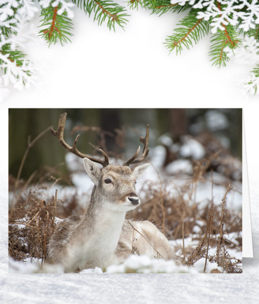 Resting Stag Christmas Card