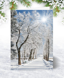Snow Covered Path Christmas Card