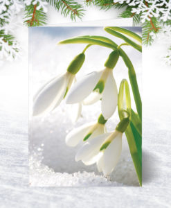 Snowdrops Christmas Card