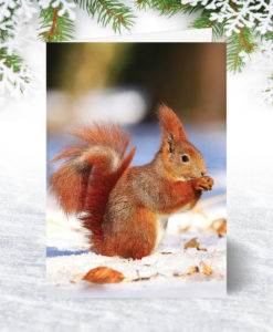 Red Squirrel Xmas Card