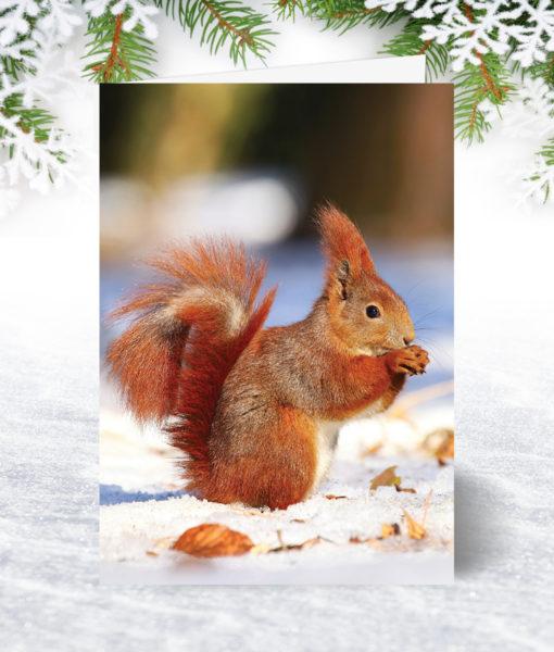 Red Squirrel Xmas Card