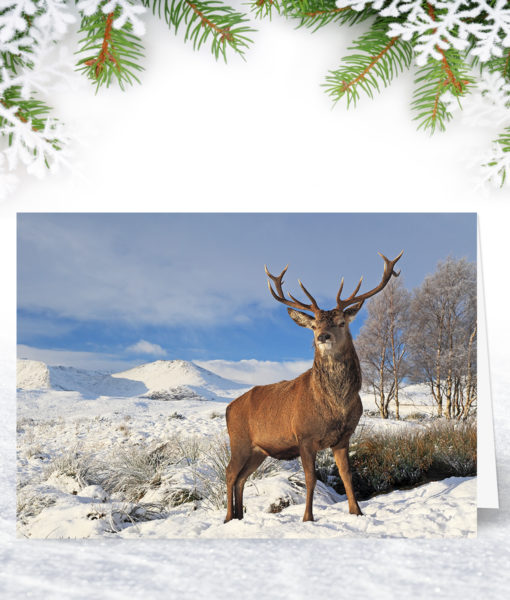 Winter Stag Christmas Card