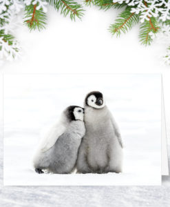 L0137 Furry Friends Christmas Card