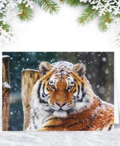Siberian Tiger Christmas Card