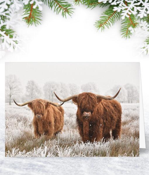 Highland Cows Christmas Card