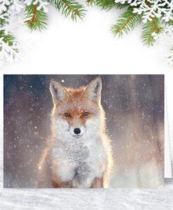Red Fox Christmas Card